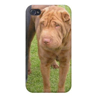 Sharpei show dog iPhone 4 covers