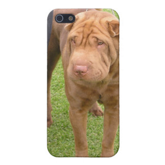 Sharpei show dog iPhone 5/5S cases