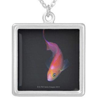 Sharpfin seabass 2 silver plated necklace