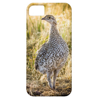Sharptailed Grouse Iphone Case iPhone 5 Case