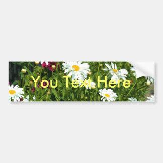 Shasta Daisy Bumper Sticker