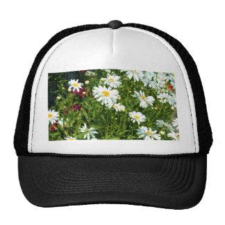 Shasta Daisy Cap Trucker Hat