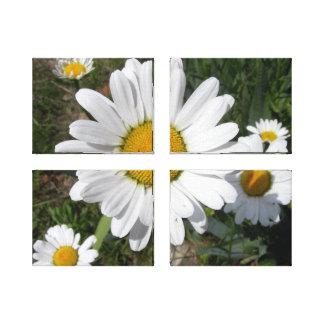 Shasta Daisy Chrysanthemum maximum Stretched Canvas Prints