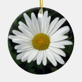Shasta Daisy - photograph Christmas Ornament