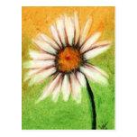 Shasta Daisy V Postcards