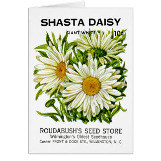 Shasta Daisy Vintage Seed Packet Greeting Card