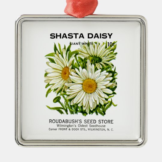 Shasta Daisy Vintage Seed Packet Silver-Colored Square Decoration