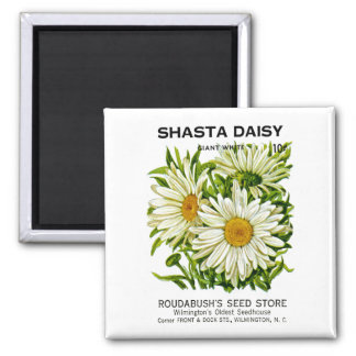 Shasta Daisy Vintage Seed Packet Square Magnet