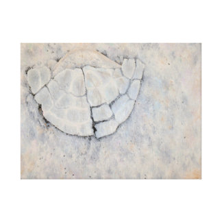 SHATTERED Oil Painted Sand Dollar Print (24x18in) Stretched Canvas Prints