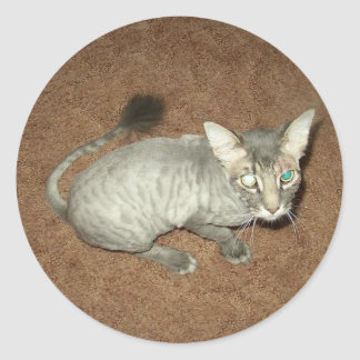 Shaved Pussy Classic Round Sticker