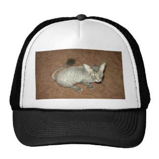 Shaved Pussy Mesh Hats