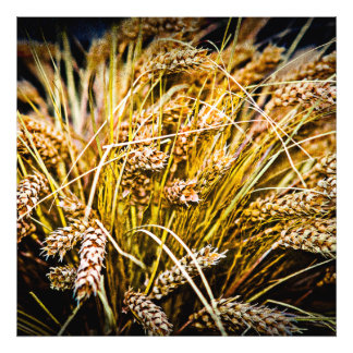 Sheaf Of Wheat - Thank You Photographic Print
