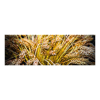Sheaf Of Wheat - Thank You Photograph