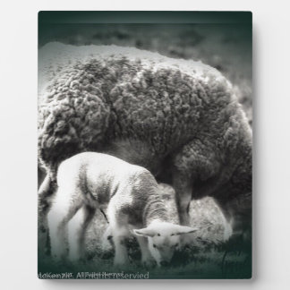 Sheep and lamb mono picture plaque