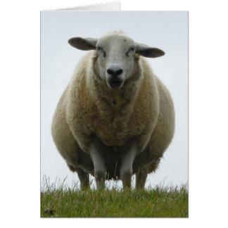 Sheep Apology Card