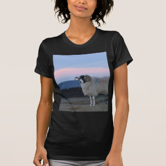 Sheep Black Fitted Ladies Tee Shirt