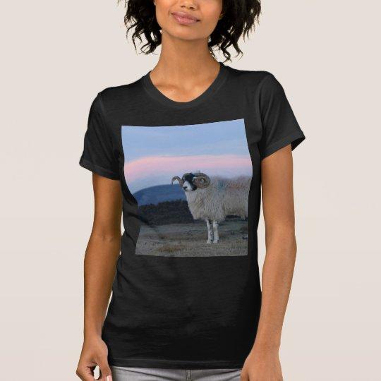 Sheep Black Fitted Ladies Tee Shirt