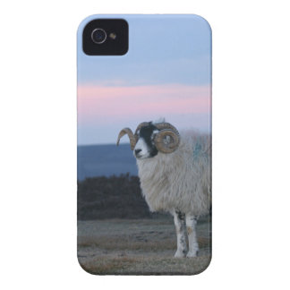 Sheep BlackBerry Bold Case-Mate Barely There