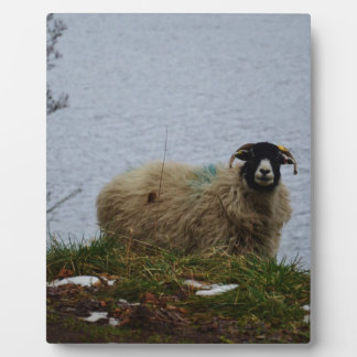 Sheep by the water plaque