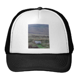 sheep cap