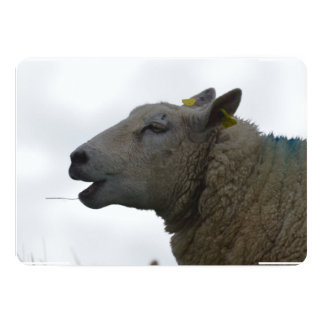 Sheep Chomping on Hay 5x7 Paper Invitation Card