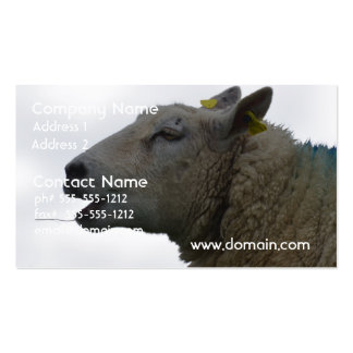 Sheep Chomping on Hay Pack Of Standard Business Cards