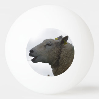 Sheep Chomping on Hay