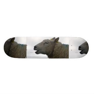 Sheep Chomping on Hay Skate Boards