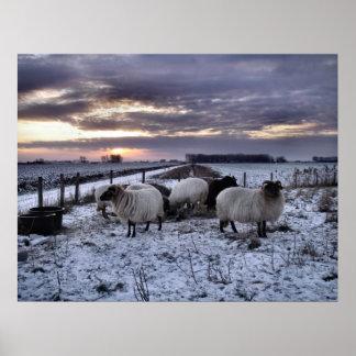 Sheep - Dutch Winter Poster