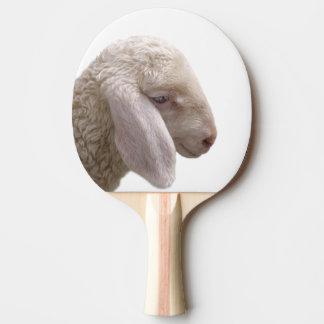 Sheep farm animal photography ping pong paddle