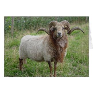 Sheep - Fox colored Ram Card