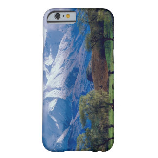 Sheep grazing below the snow-capped Harris Barely There iPhone 6 Case