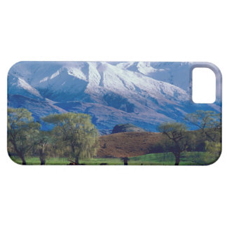 Sheep grazing below the snow-capped Harris iPhone 5 Cases