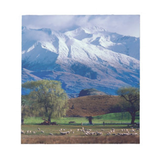 Sheep grazing below the snow-capped Harris Notepad