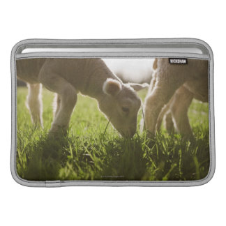 Sheep Grazing in Grass MacBook Sleeve