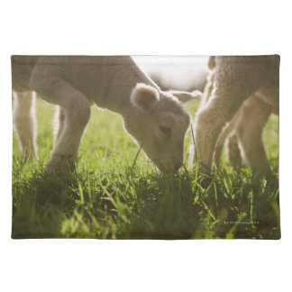 Sheep Grazing in Grass Placemat