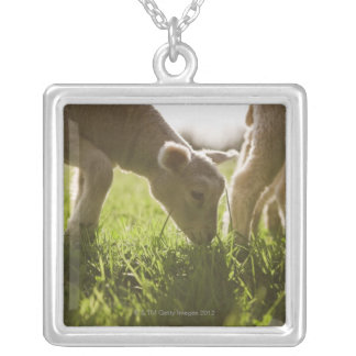 Sheep Grazing in Grass Silver Plated Necklace