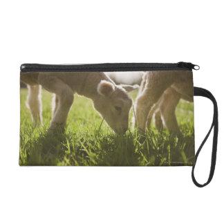 Sheep Grazing in Grass Wristlet