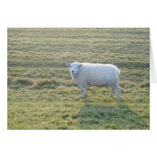 Sheep in field card
