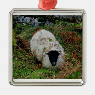Sheep in hideing on dartmoor christmas ornament