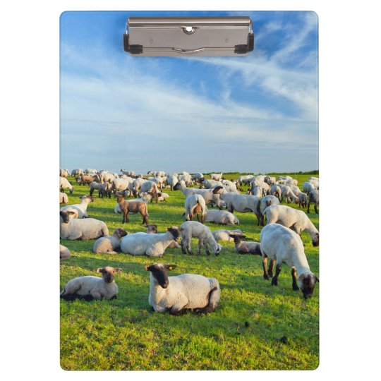 Sheep in Pasture Clipboards