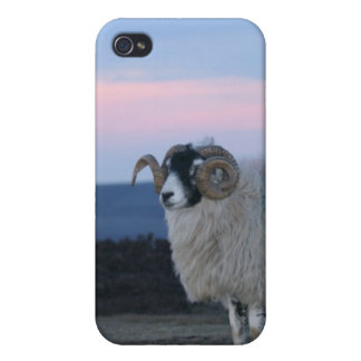 Sheep iPhone 4 Case