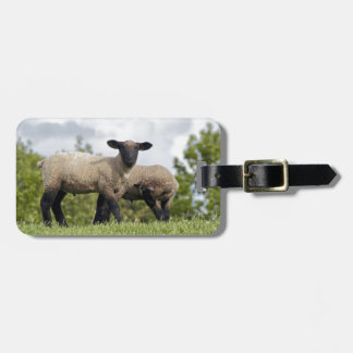 sheep luggage tag