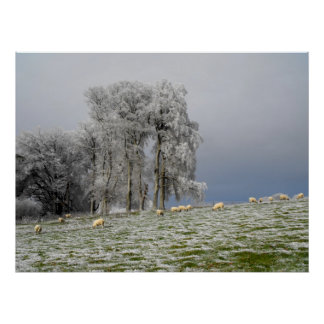 Sheep on a frosty hill poster
