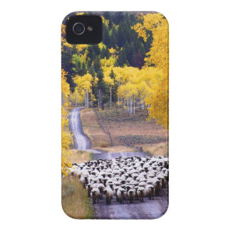 Sheep on Country Road Case-Mate iPhone 4 Case