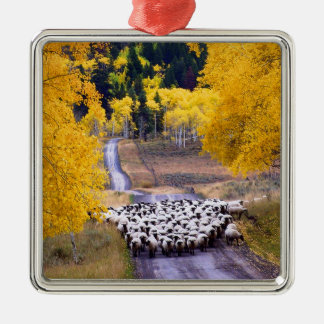 Sheep on Country Road Christmas Ornament