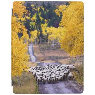 Sheep on Country Road iPad Cover