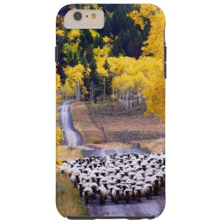 Sheep on Country Road Tough iPhone 6 Plus Case