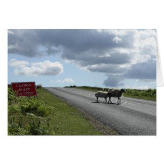 Sheep on road card