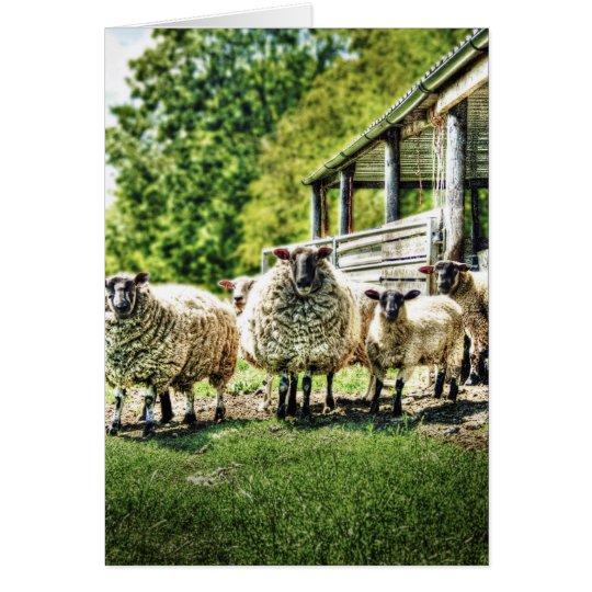 Sheep on the Farm Cards